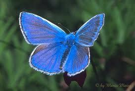 ali_butterfly